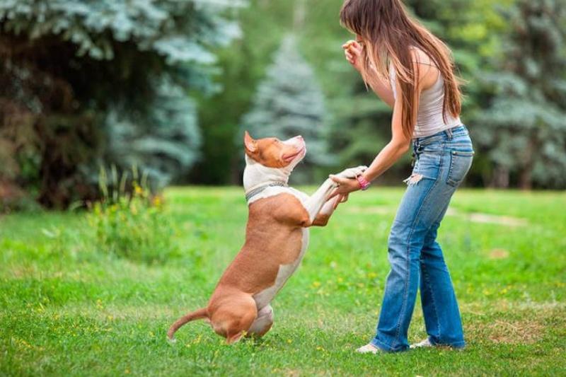 ensinistradors-de-gossos
