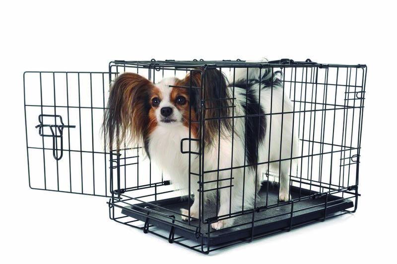gabia-per-a-gossos