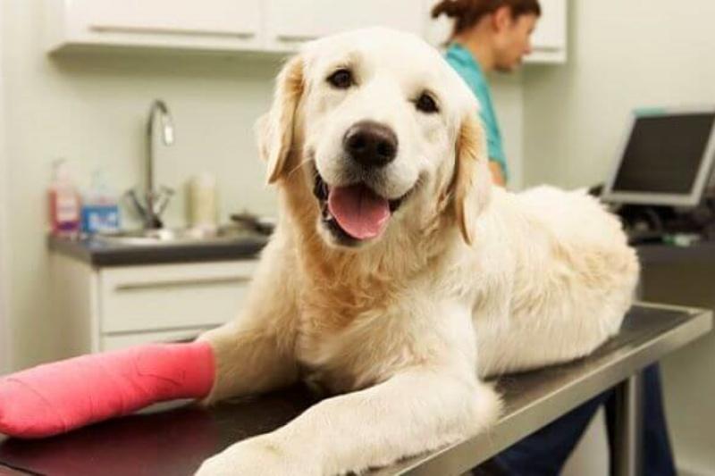 seguro-para-perros