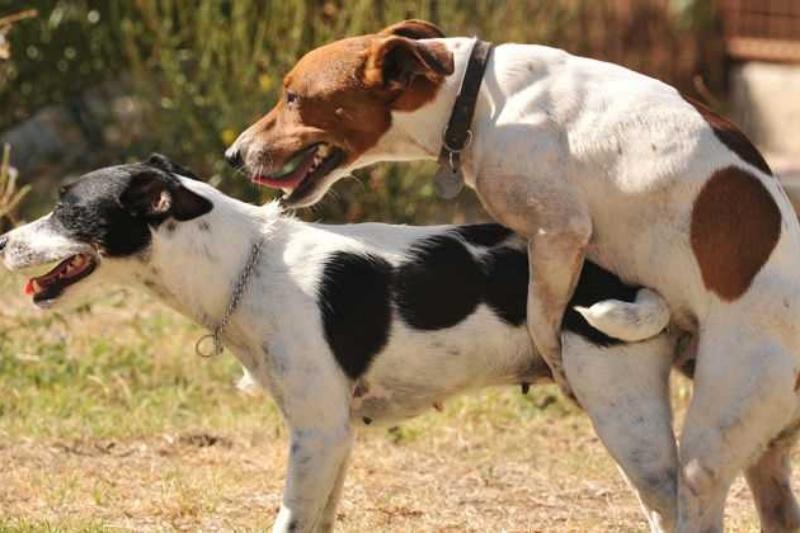 sexe-gossos